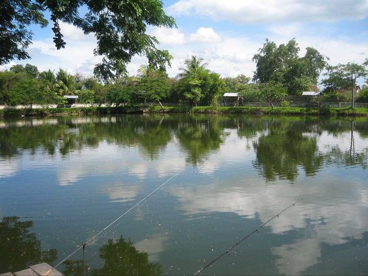 Fishing lake near chiang mai dream lake fishing lake for Nearest fishing lake