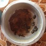 Mini-skildpadder som man kunne købe og slippe fri i søen...