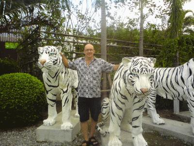 kim hvide tigere