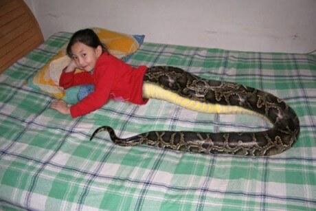 Slangepige vækker stor opsigt i Thailand