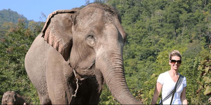 Besøg redningscenteret for elefanter