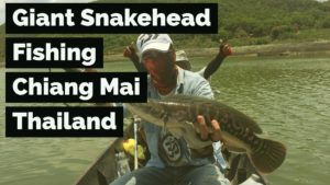 Giant Snakehead fishing Chiang Mai Thailand