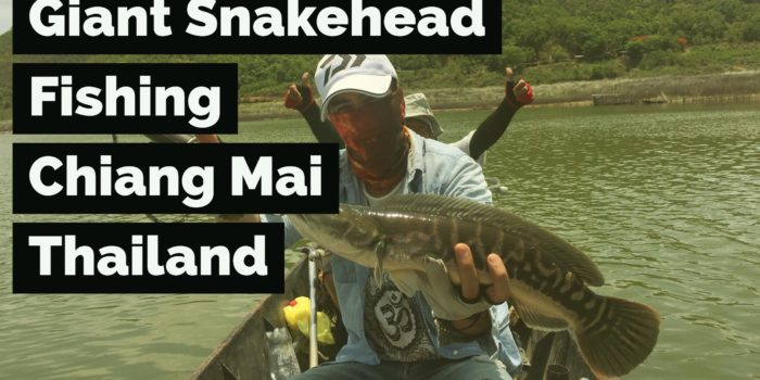 Gone Fishing for Giant Snakehead