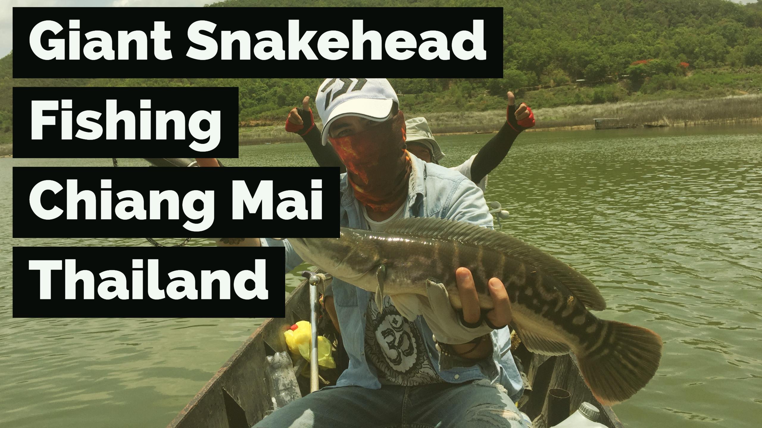 På fisketur efter Giant Snakehead